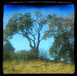 Ttv trees